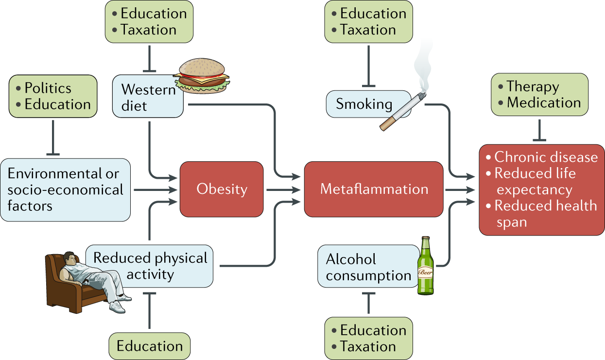 The Western lifestyle has lasting effects on metaflammation
