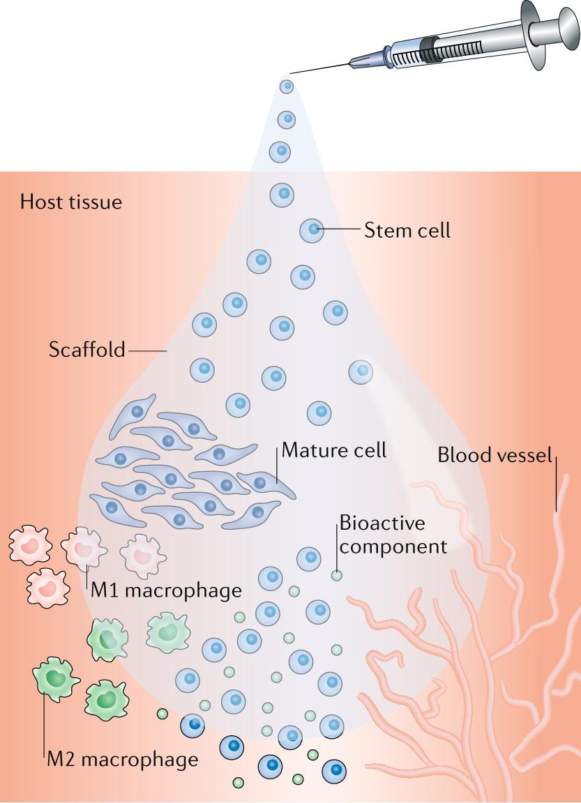 Biomaterials For Cell Transplantation Nature Reviews Materials