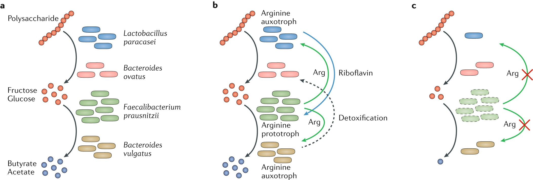 The Social Network Of Microorganisms How Auxotrophies Shape Be Aware There Are Two Basic Types Proximity Switches Current Complex Communities Nature Reviews Microbiology