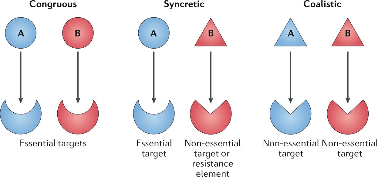 Drug combinations: a strategy to extend the life of antibiotics in the