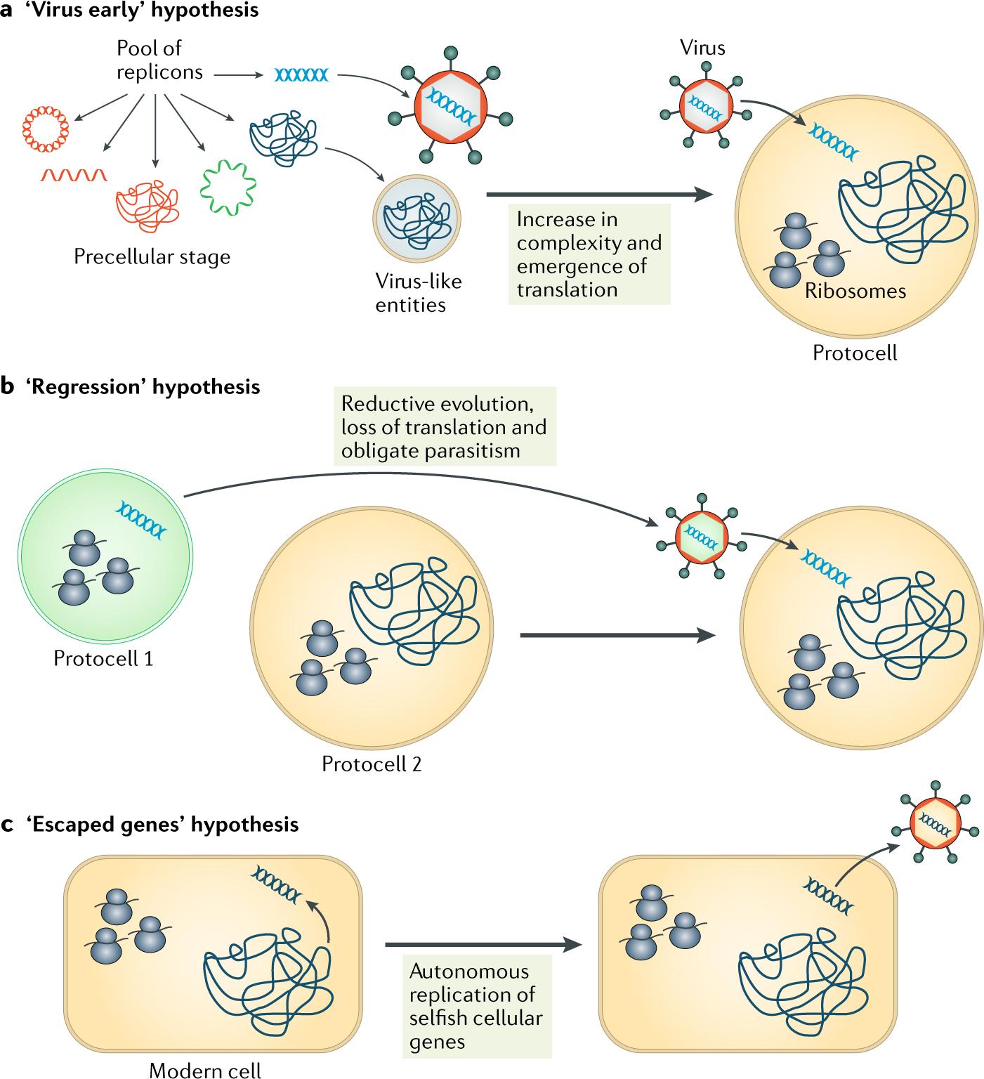 Origin of viruses: primordial replicators recruiting capsids from host