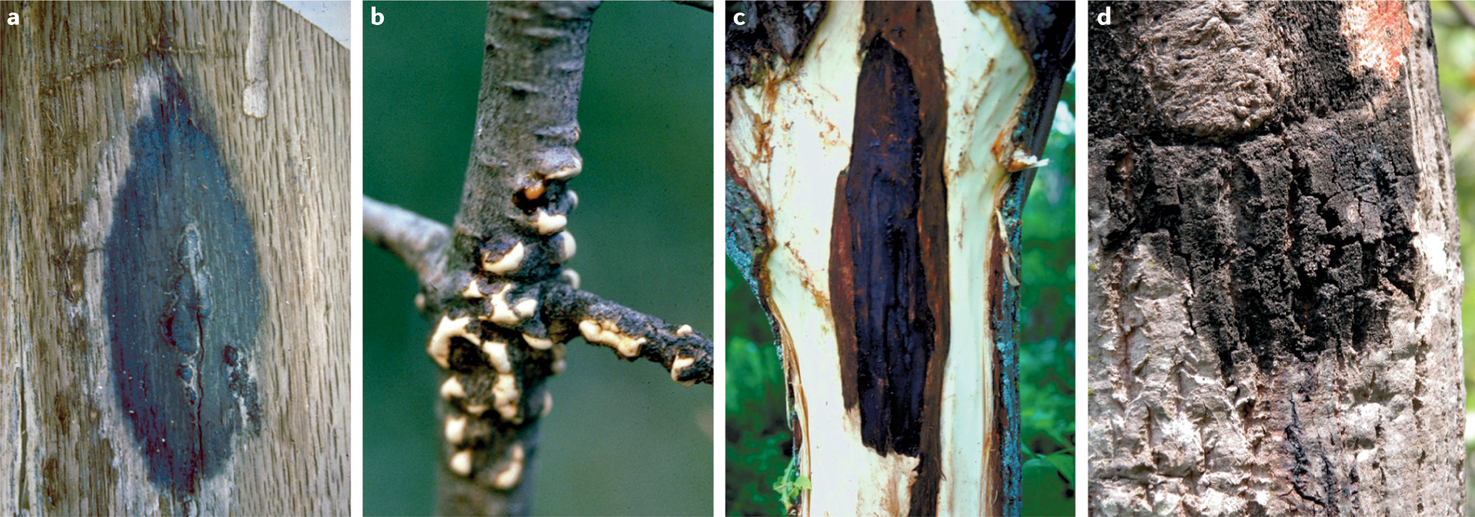 Microbial invasions in terrestrial ecosystems | Nature