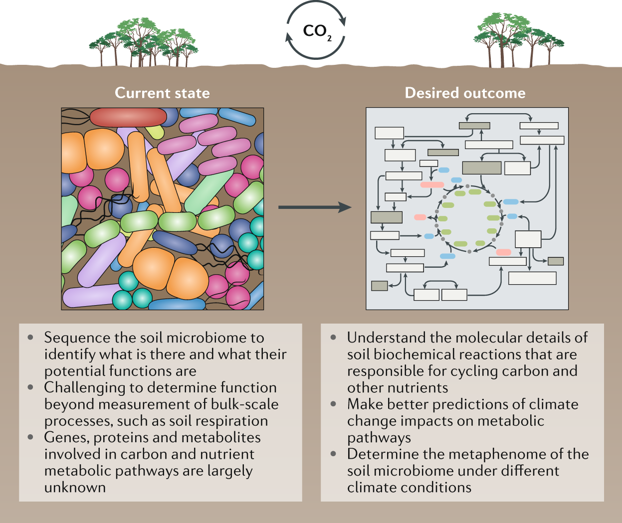Soil microbiomes and climate change | Nature Reviews Microbiology