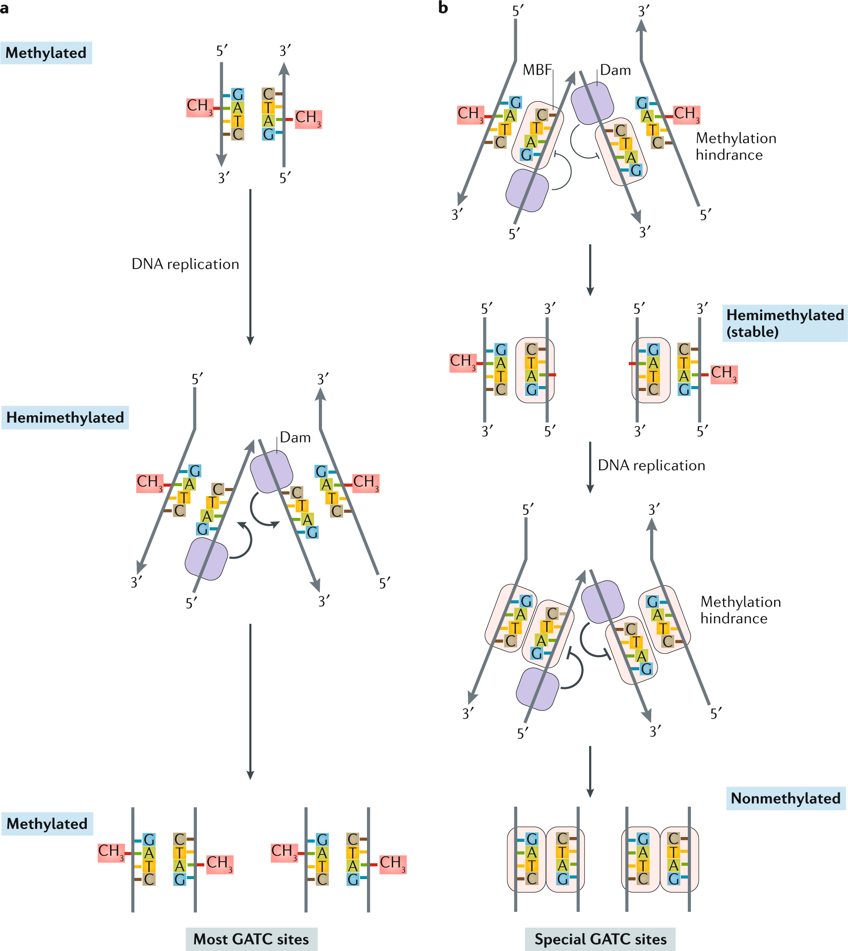 The bacterial epigenome
