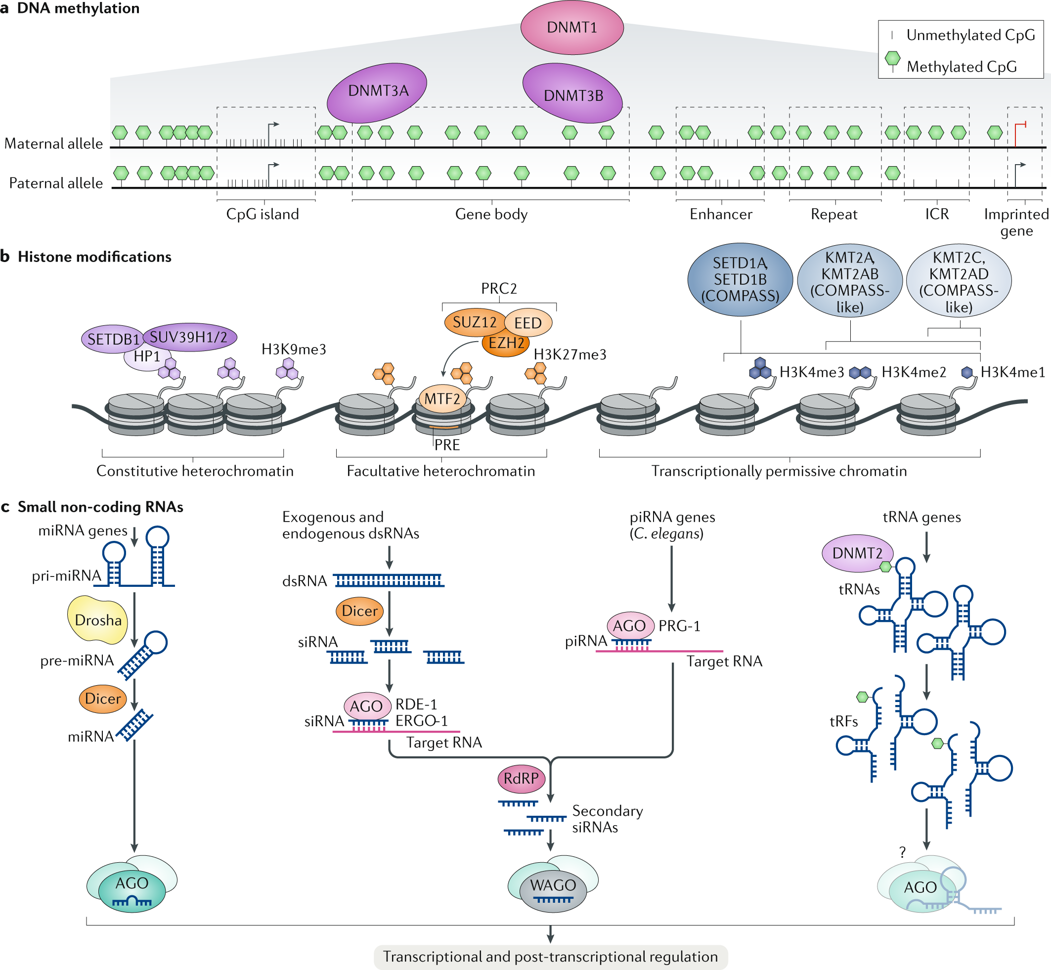 Shared Epigenetic Changes Underlie >> Functions And Mechanisms Of Epigenetic Inheritance In Animals