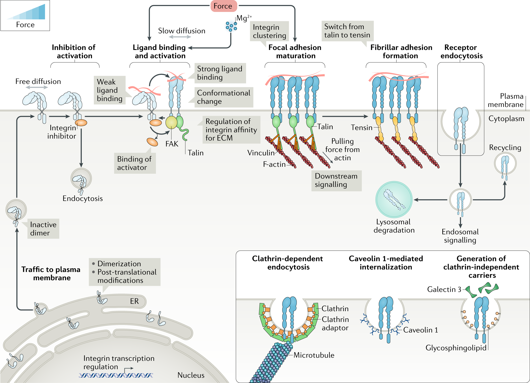 kt 3 way switch wiring diagram variations integrins as biomechanical sensors of the microenvironment  integrins as biomechanical sensors of