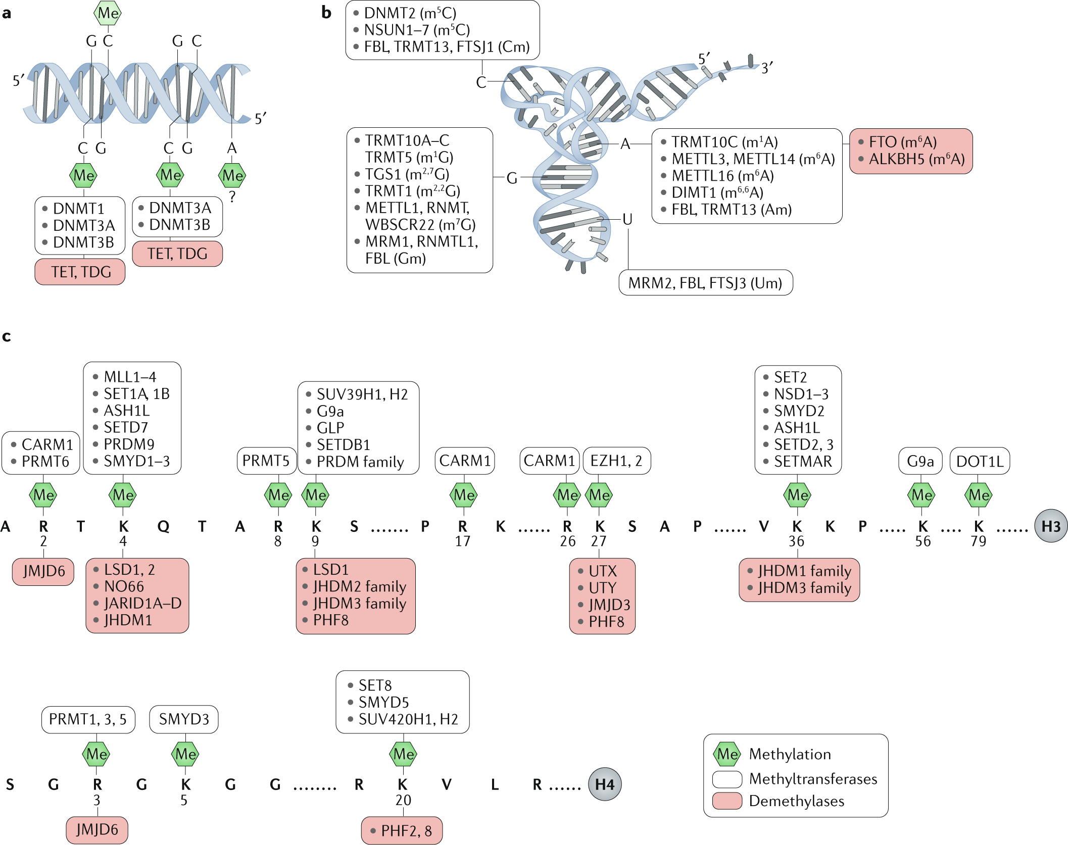 The roles of DNA, RNA and histone methylation in ageing and cancer