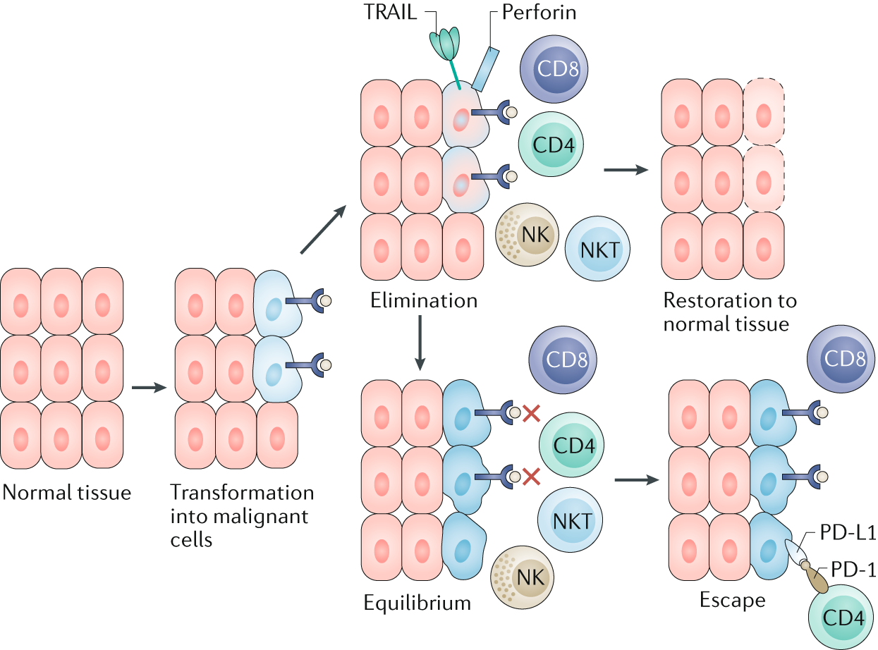 Cardiorenal Complications Of Immune Checkpoint Inhibitors Nature Switching Regulators Using Lm 2575 And 2577 Reviews Nephrology