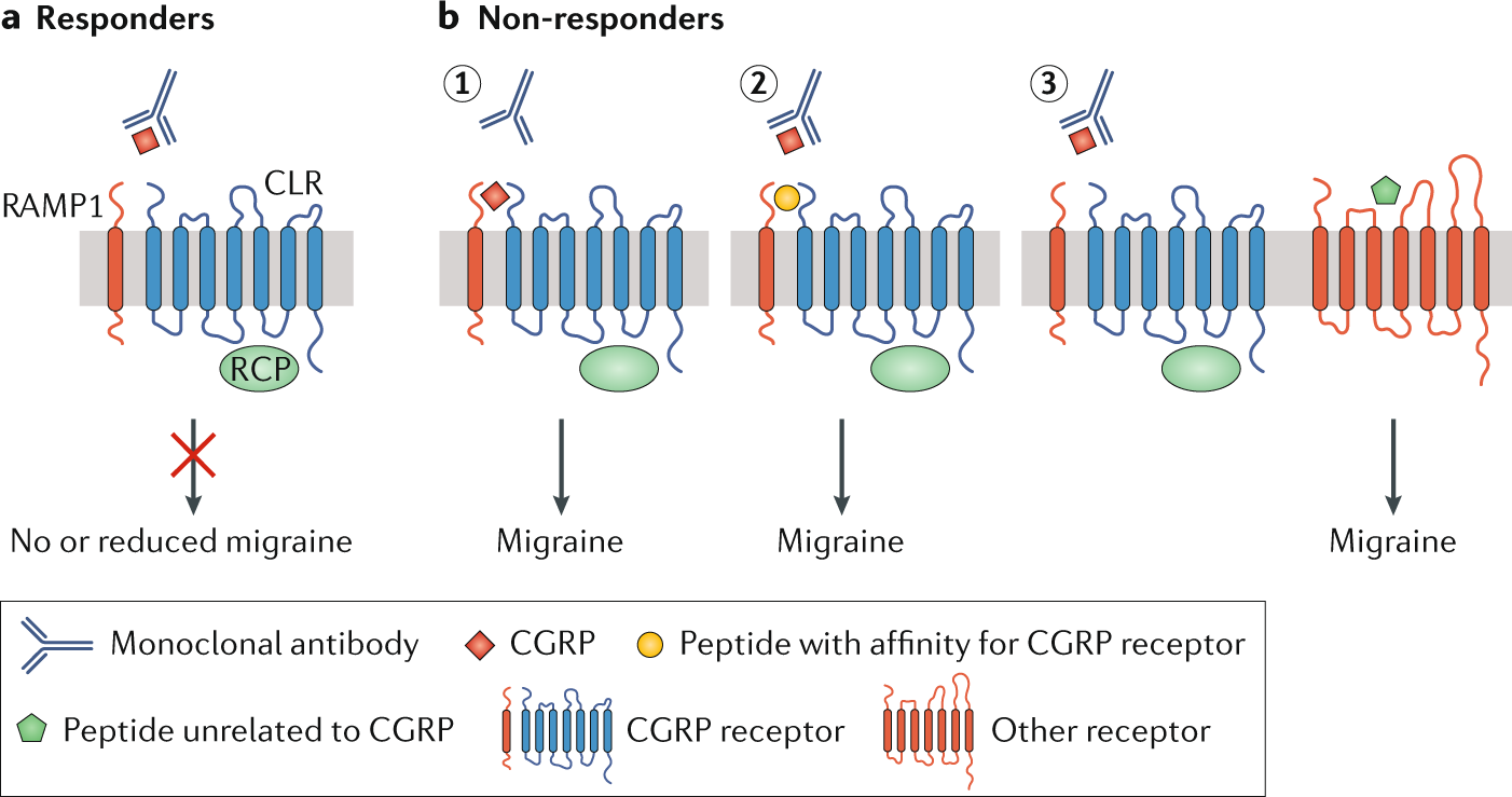 CGRP-targeted antibodies in difficult-to-treat migraine