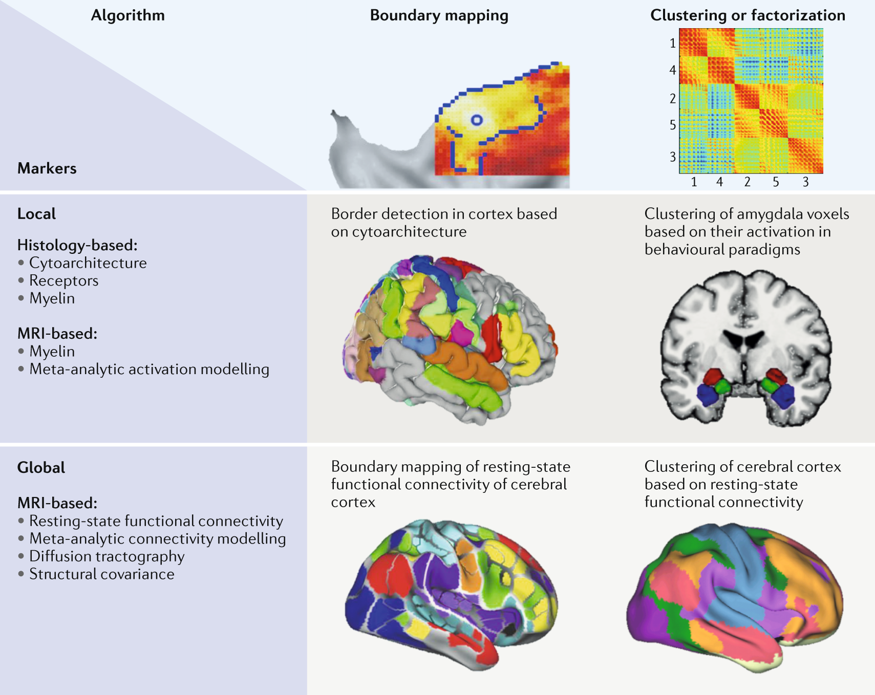 Imaging-based parcellations of the human brain | Nature Reviews ...