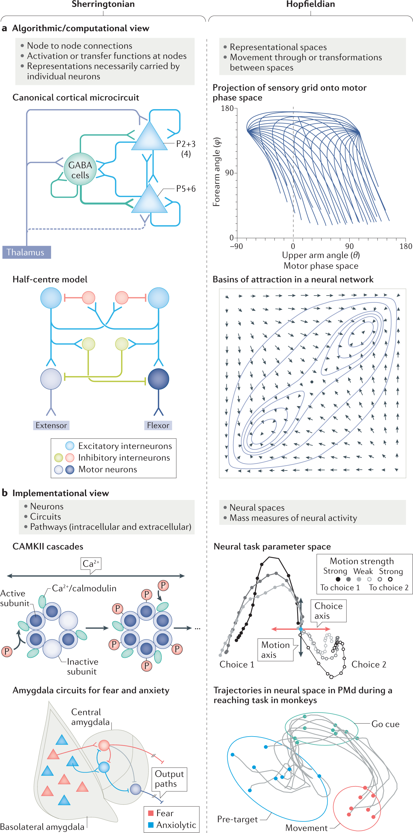 Two views on the cognitive brain   Nature Reviews Neuroscience