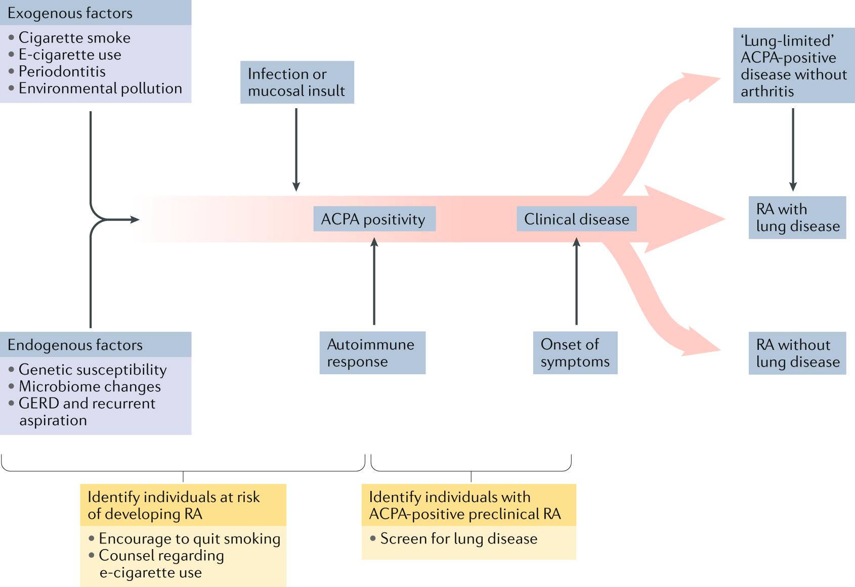 Mechanisms of lung disease development in rheumatoid arthritis