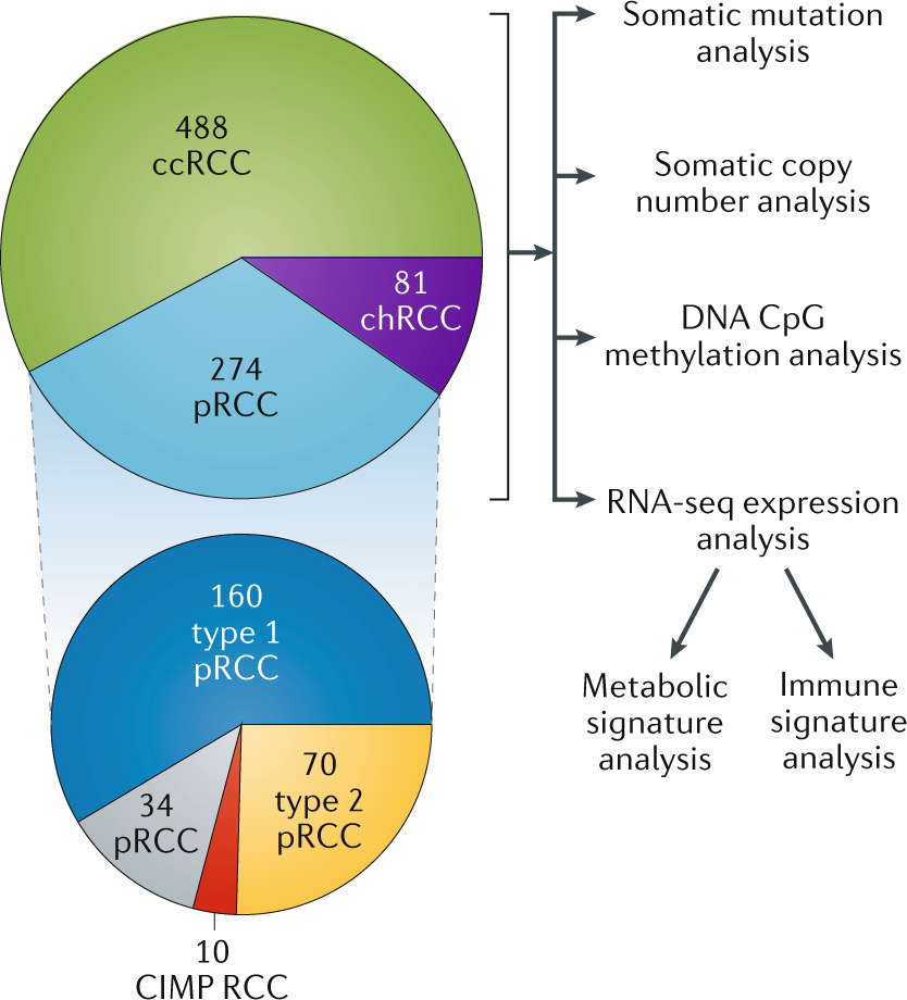 The Cancer Genome Atlas of renal cell carcinoma: findings
