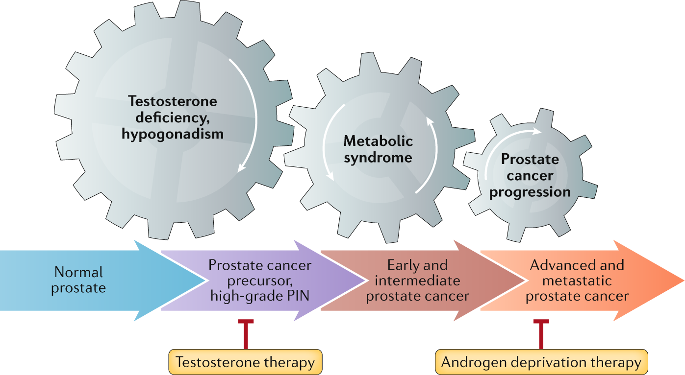 testosterone and prostate cancer 2021