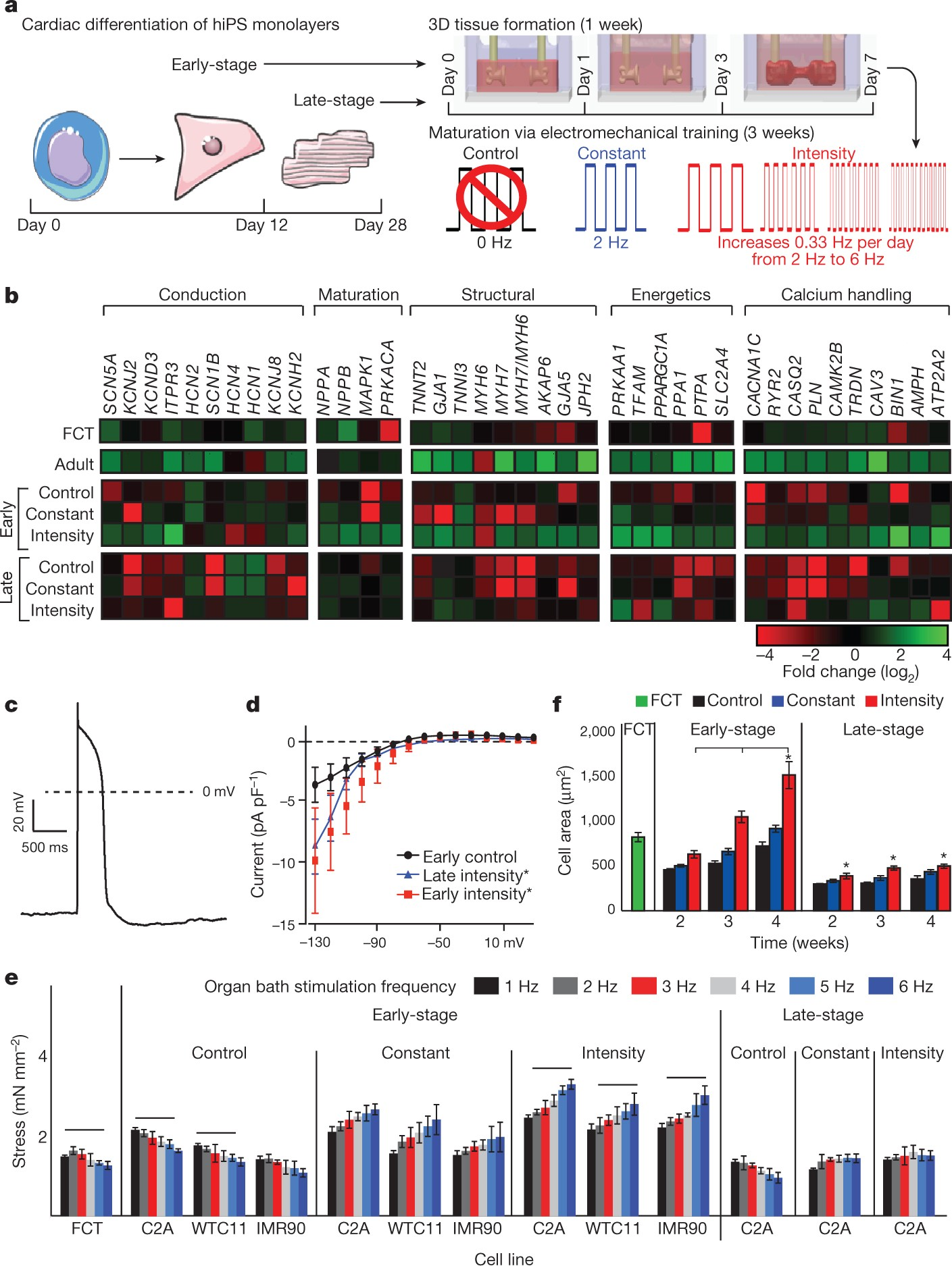 Advanced maturation of human cardiac tissue grown from pluripotent