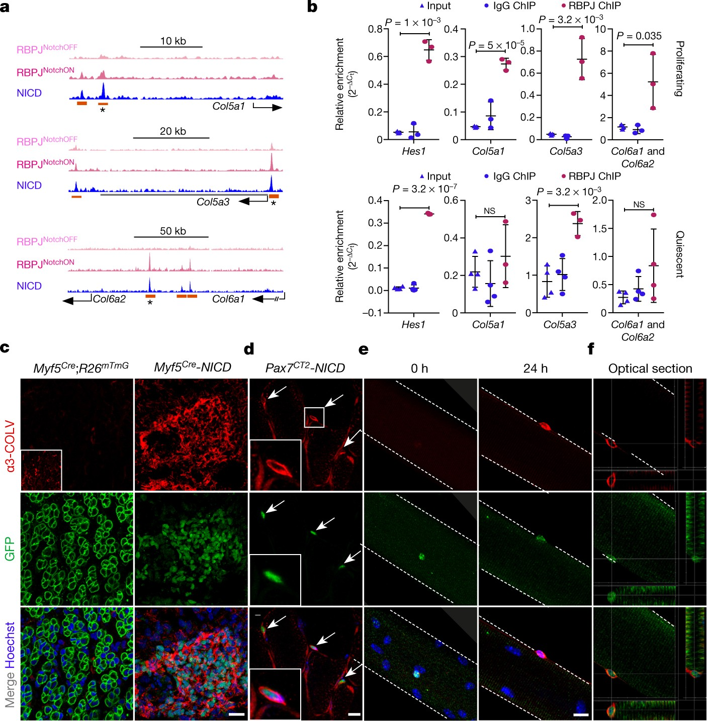 Reciprocal signalling by Notch–Collagen V–CALCR retains