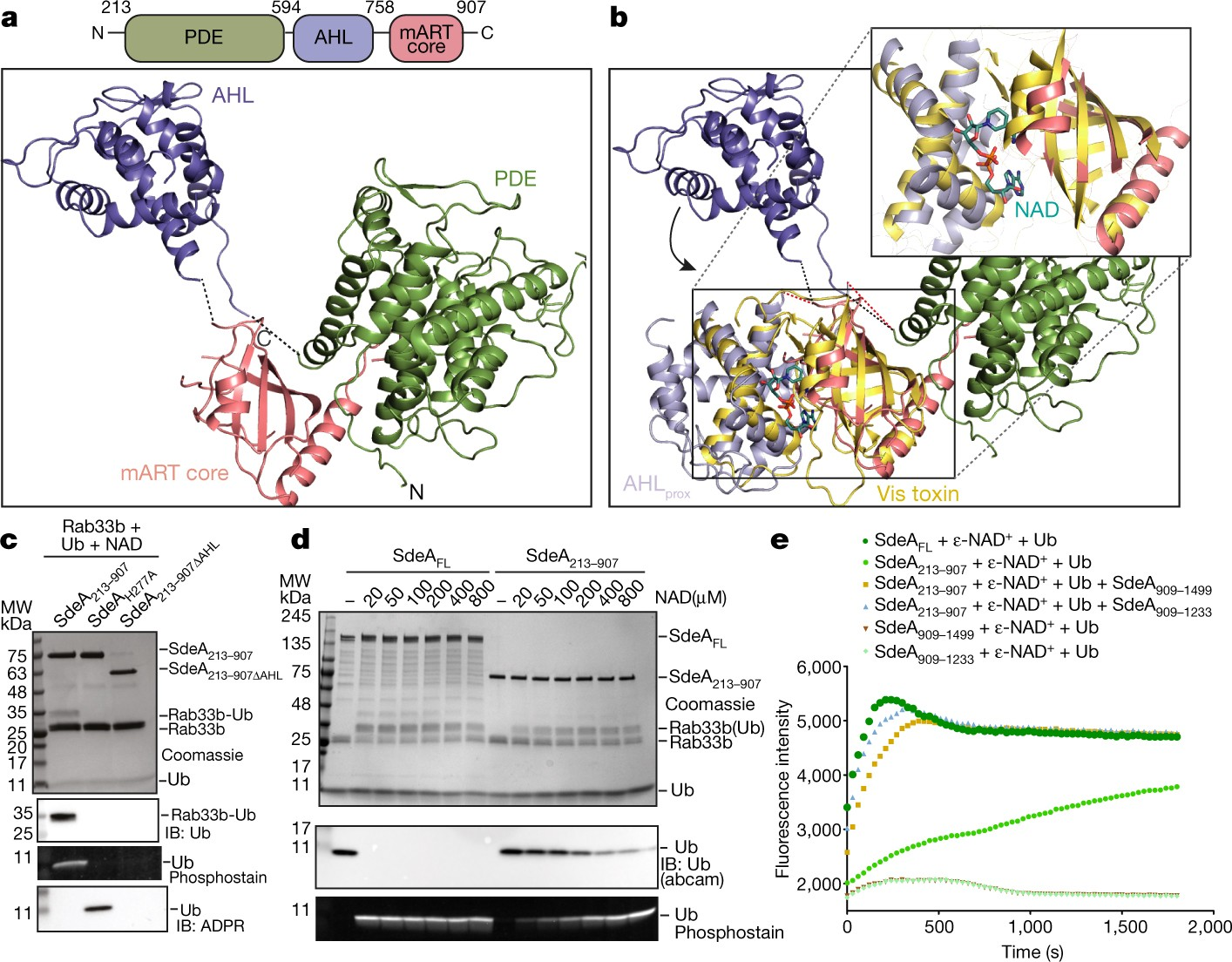 Insights into catalysis and function of phosphoribosyl linked serine