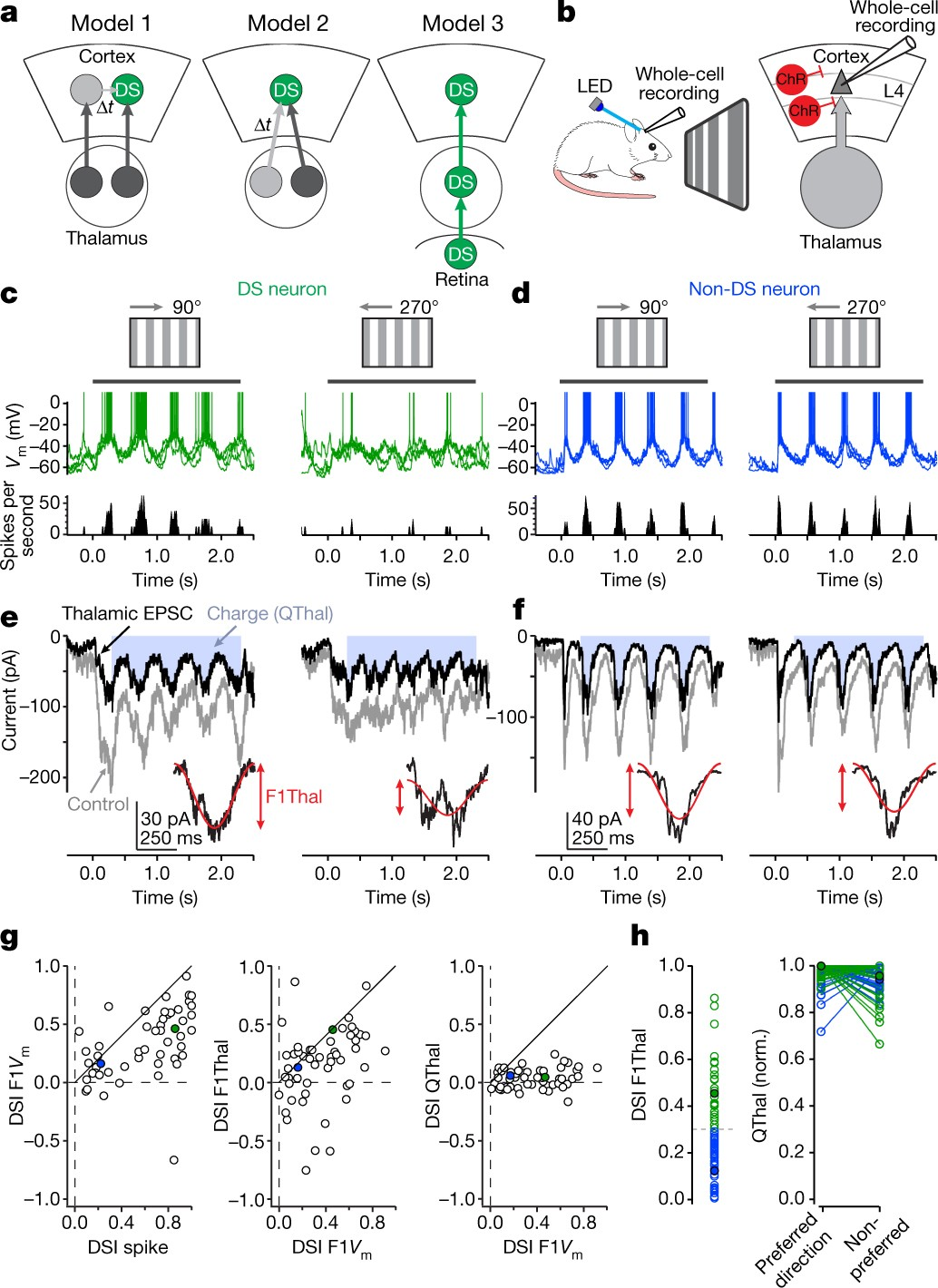 Cortical direction selectivity emerges at convergence of