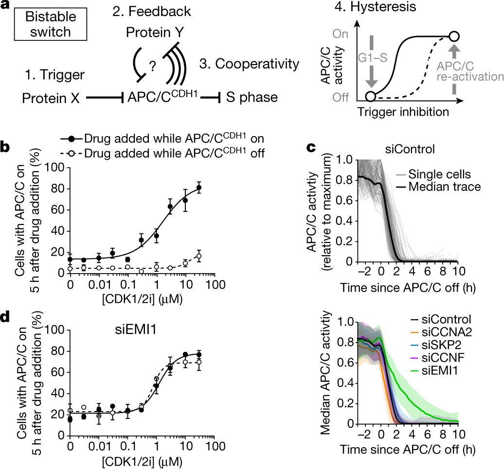 Emi1 Switches From Being A Substrate To An Inhibitor Of Apcc Cdh1