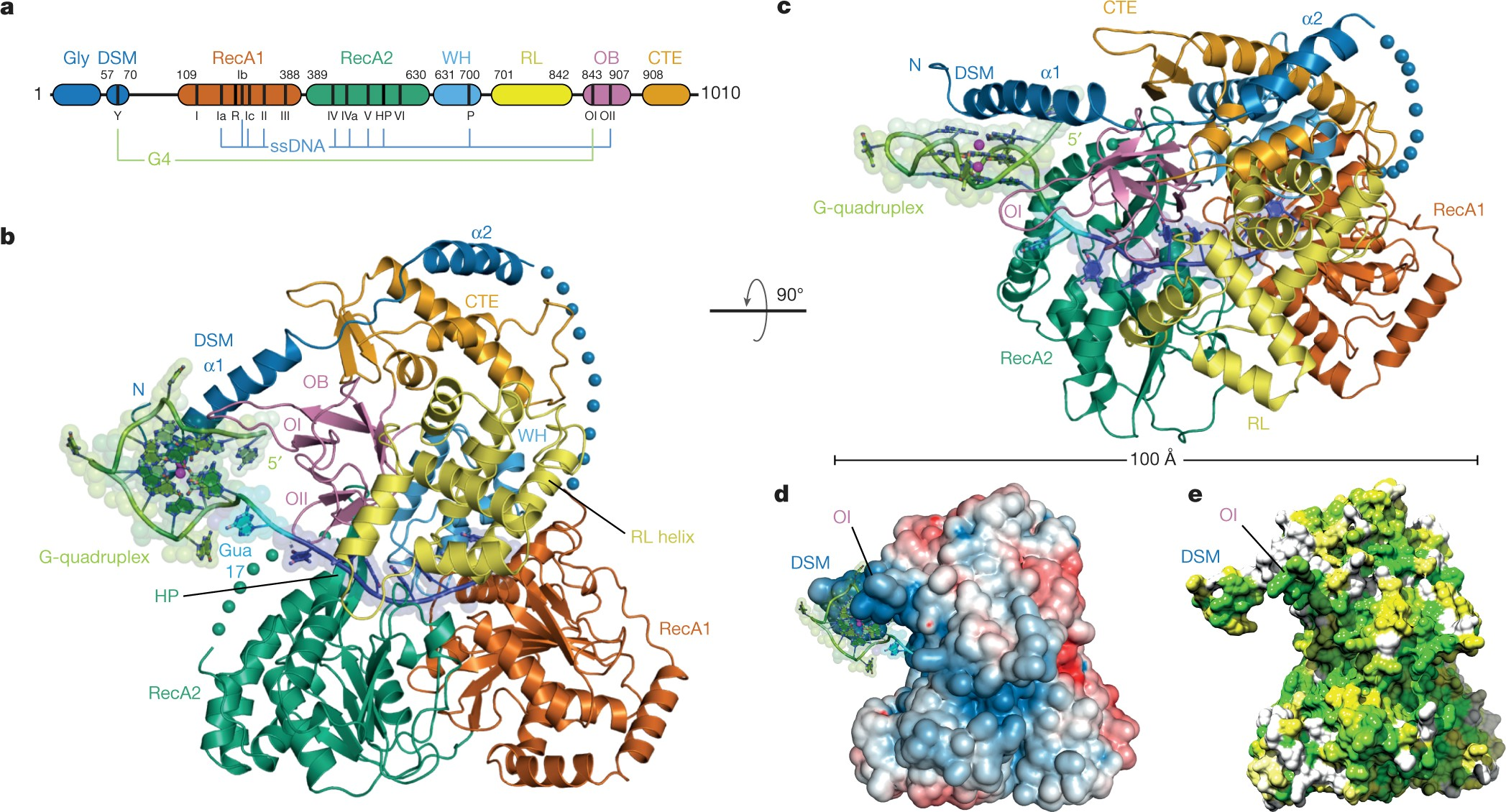 Structural Basis Of G Quadruplex Unfolding By The Deah Rha Helicase 3 Phase Motor Starter In On June 16 2014 1 Comments Dhx36 Nature