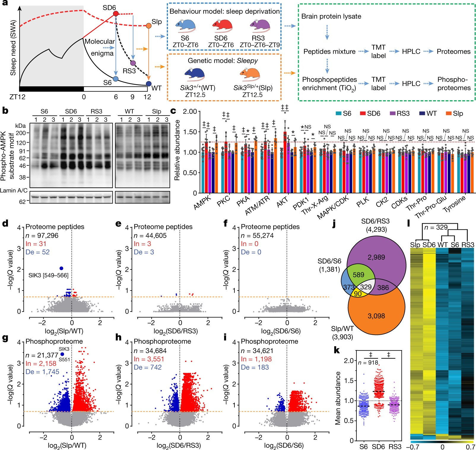 Quantitative phosphoproteomic analysis of the molecular substrates