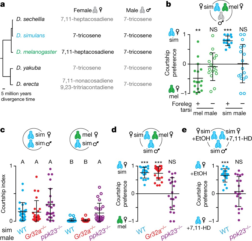 Evolution Of A Central Neural Circuit Underlies Drosophila Mate Counter Using 7 Segment Display Public Online Preferences Nature