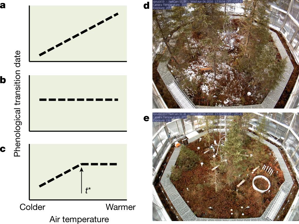 Ecosystem warming extends vegetation activity but heightens