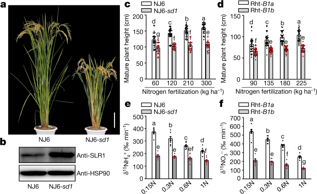 Modulating plant growth–metabolism coordination for