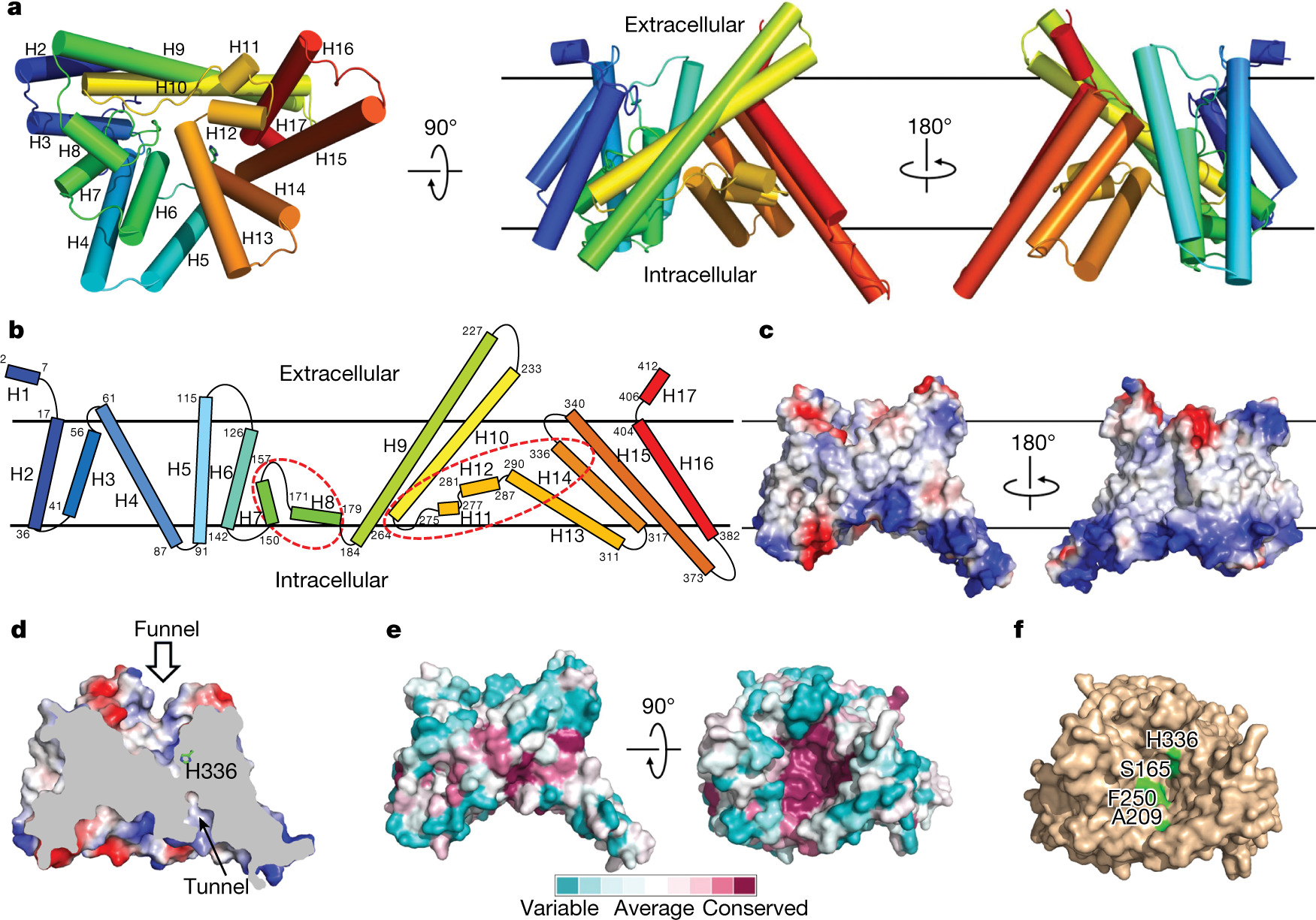 Crystal structure of a membrane bound O acyltransferase