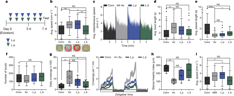A gut microbial factor modulates locomotor behaviour in Drosophila