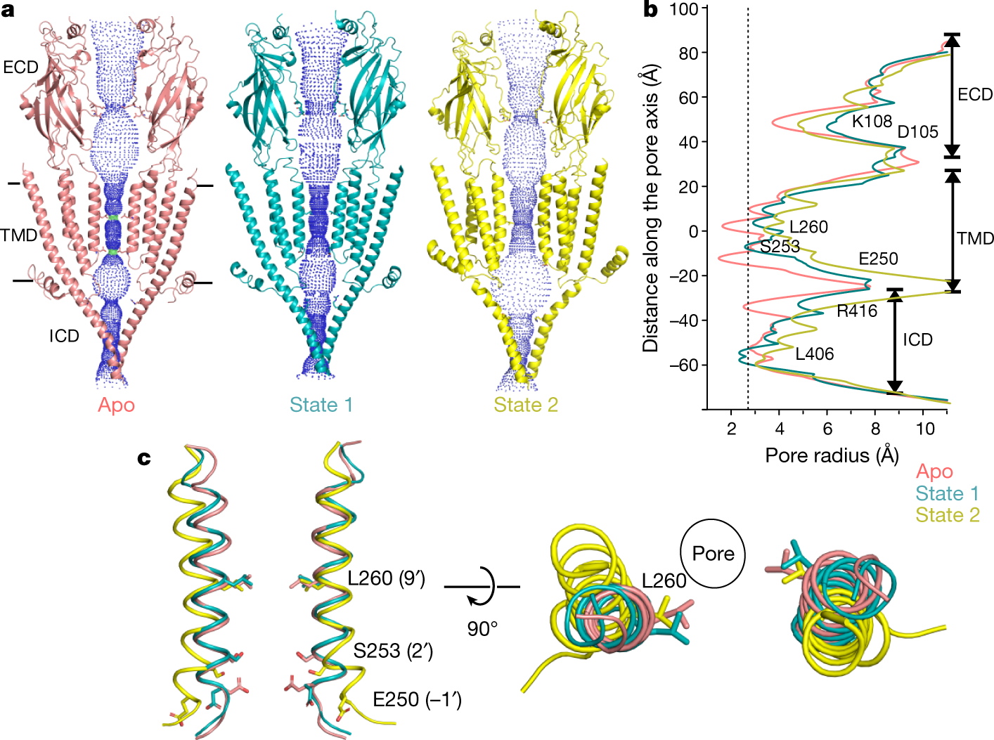 Cryo-EM reveals two distinct serotonin-bound conformations of full