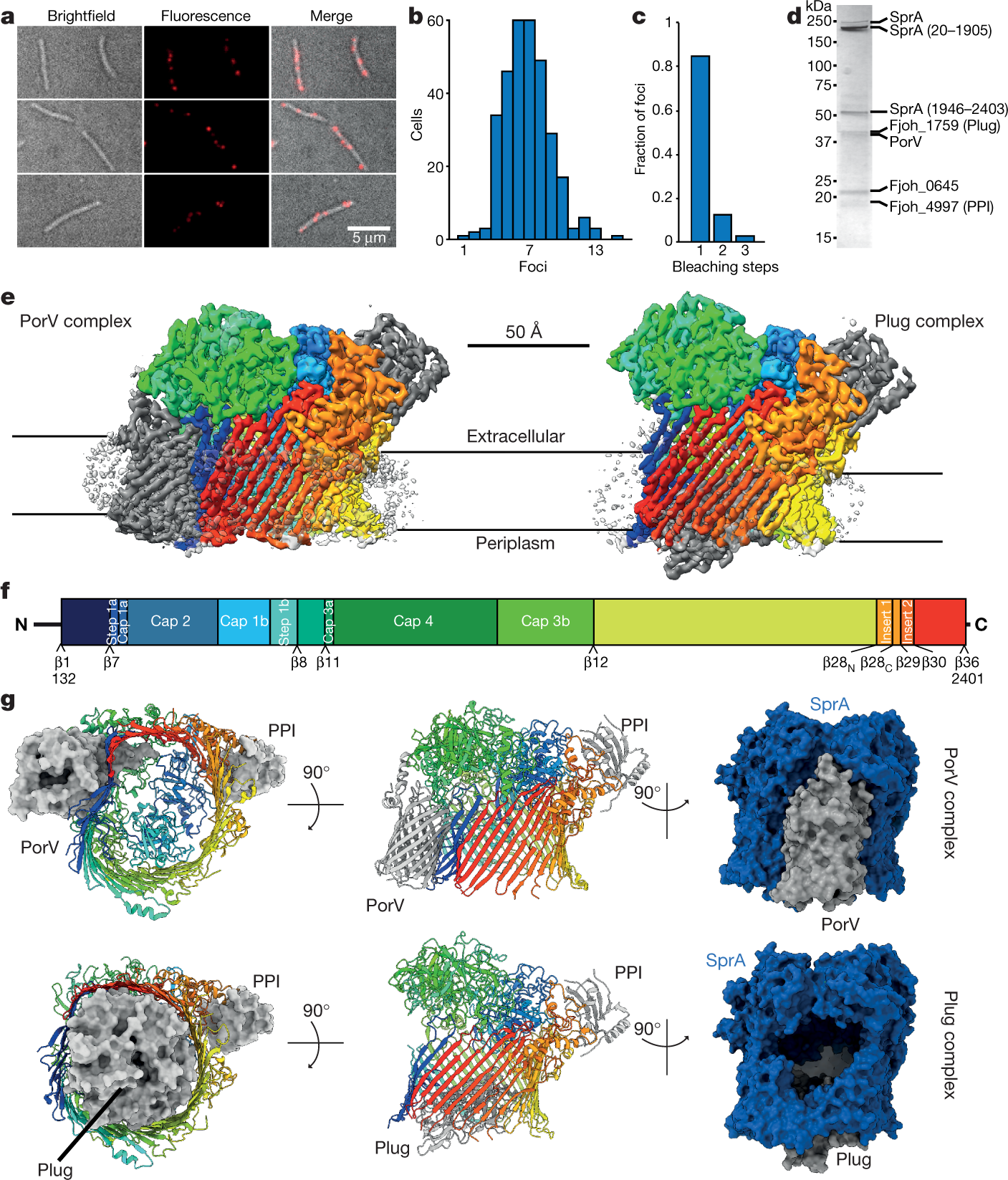 Type 9 secretion system structures reveal a new protein