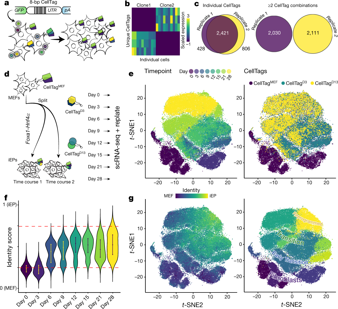 Single-cell mapping of lineage and identity in direct