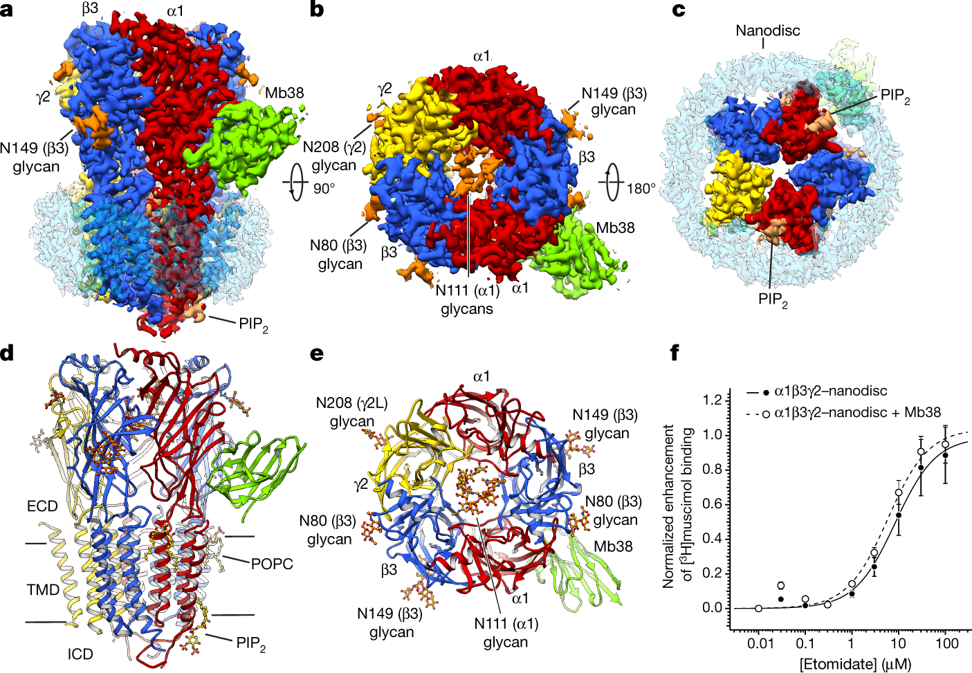 Cryo-EM structure of the human α1β3γ2 GABA A receptor in a