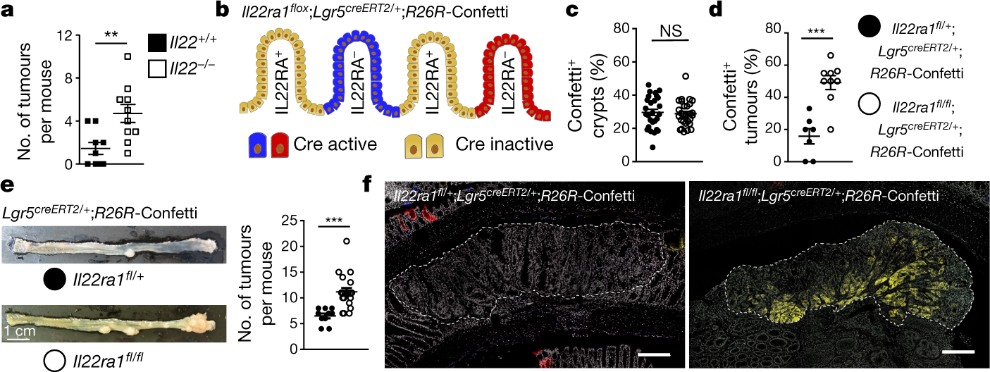 Interleukin-22 protects intestinal stem cells against