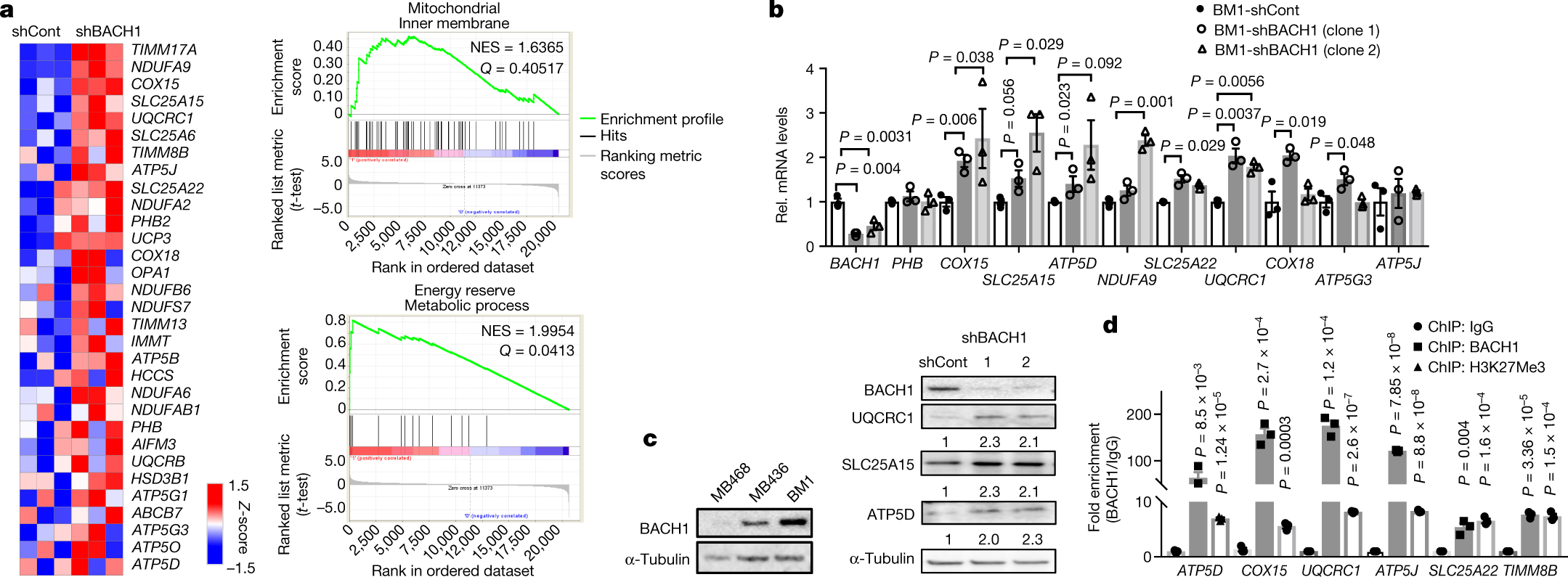 Effective breast cancer combination therapy targeting bach1 and mitochondrial metabolism nature