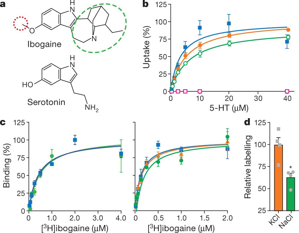 Serotonin transporter–ibogaine complexes illuminate