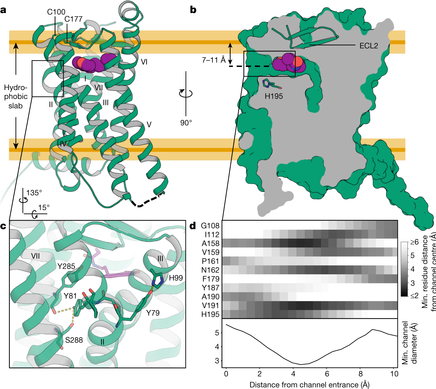 Structural basis of ligand recognition at the human MT 1 melatonin