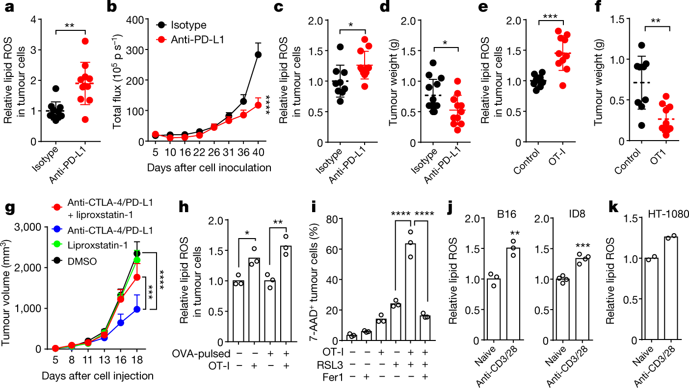 CD8 + T cells regulate tumour ferroptosis during cancer