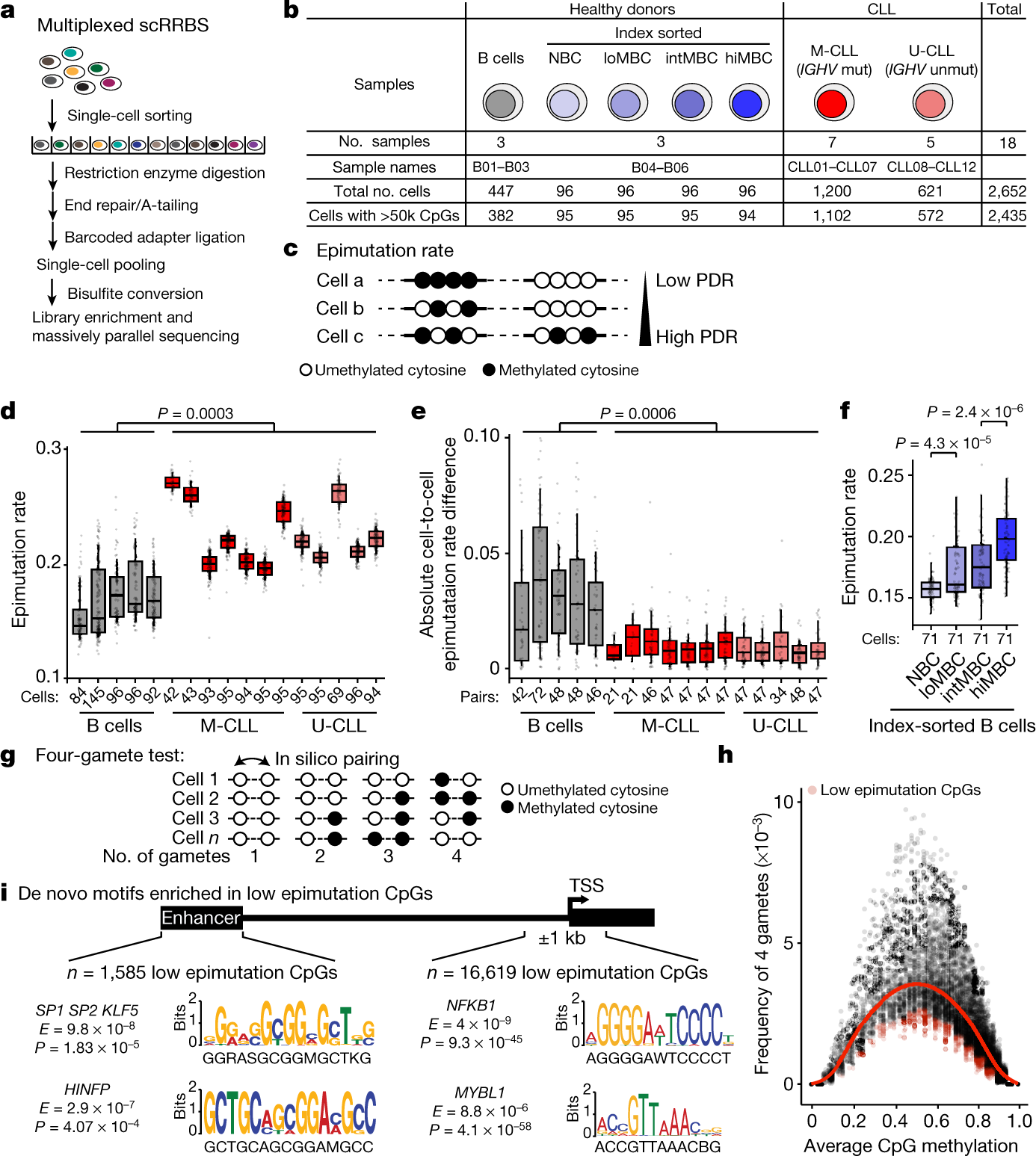 Epigenetic evolution and lineage histories of chronic lymphocytic