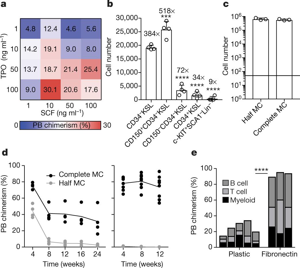 Long-term ex vivo haematopoietic-stem-cell expansion allows