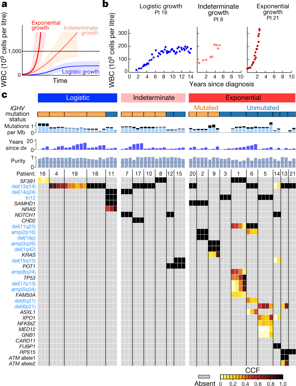 Growth dynamics in naturally progressing chronic lymphocytic
