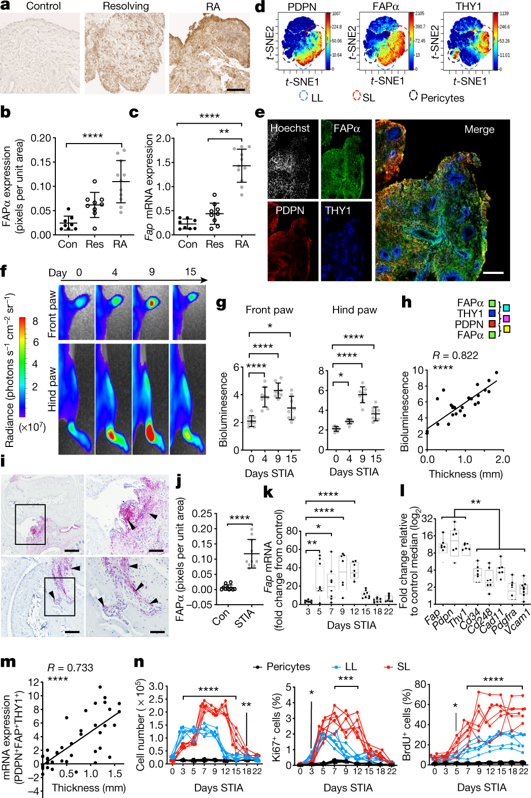 Distinct fibroblast subsets drive inflammation and damage in