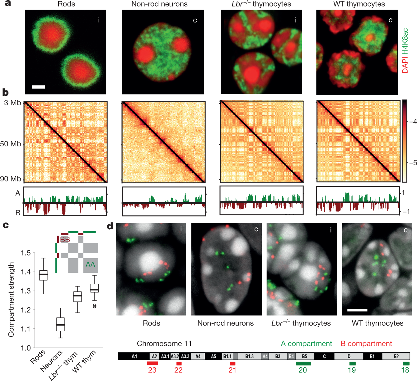 Heterochromatin drives compartmentalization of inverted and
