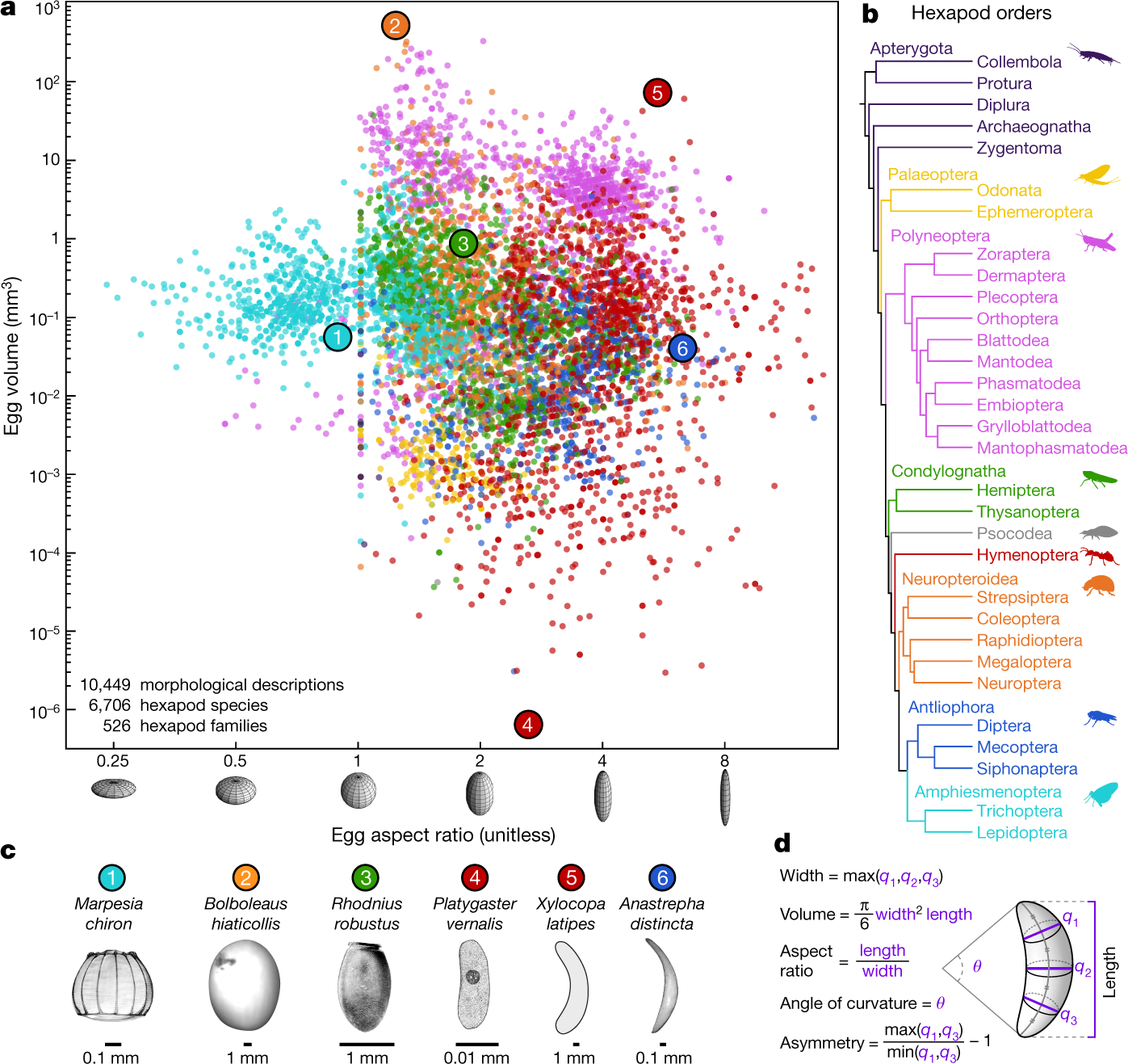 Insect egg size and shape evolve with ecology but not developmental ra