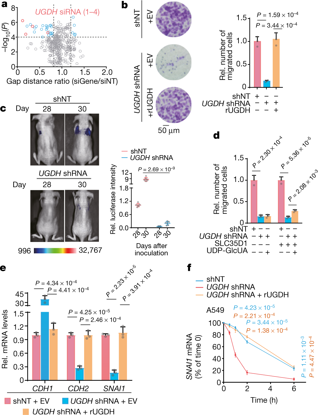UDP-glucose accelerates SNAI1 mRNA decay and impairs lung