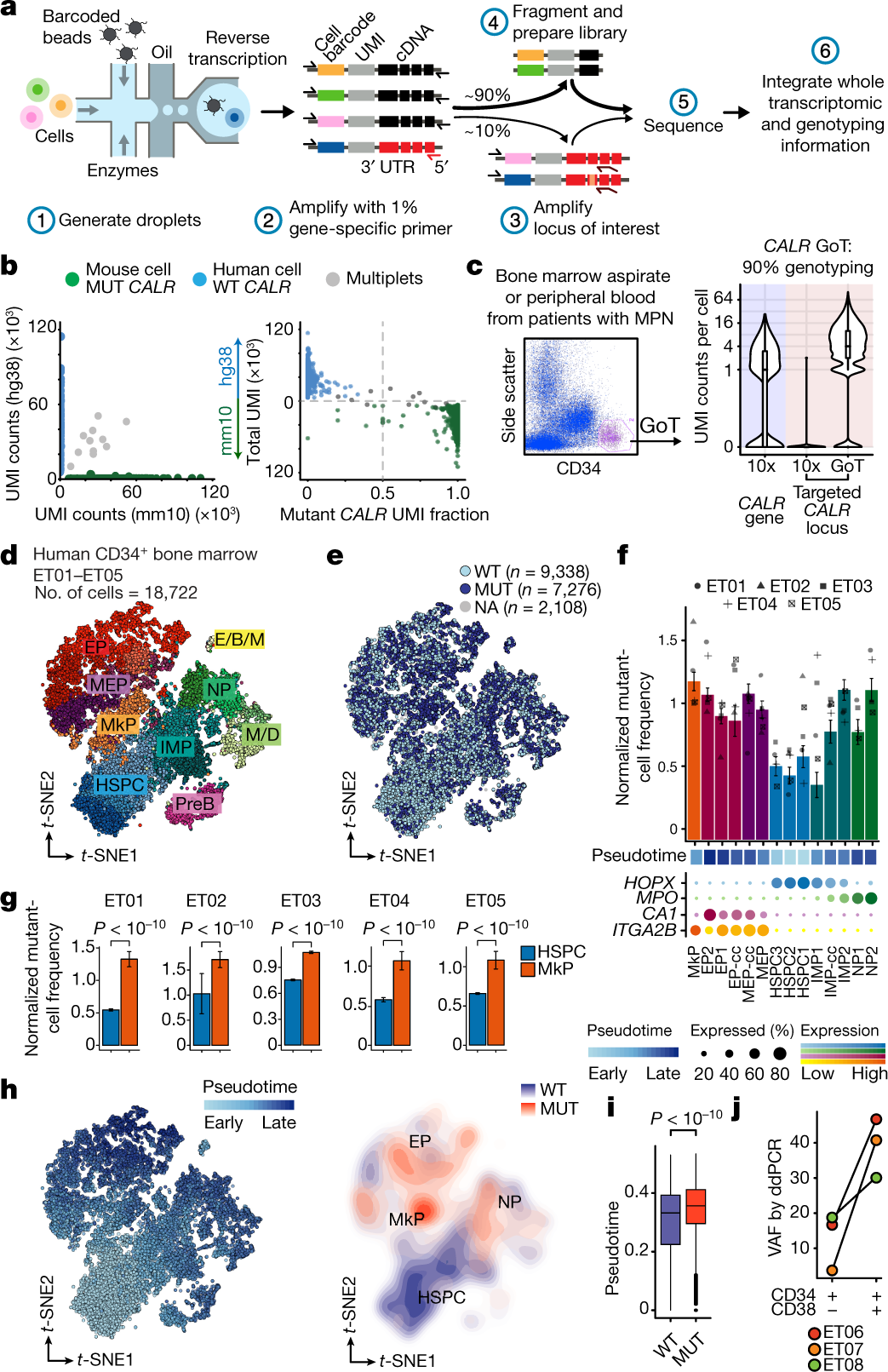 Somatic mutations and cell identity linked by Genotyping of