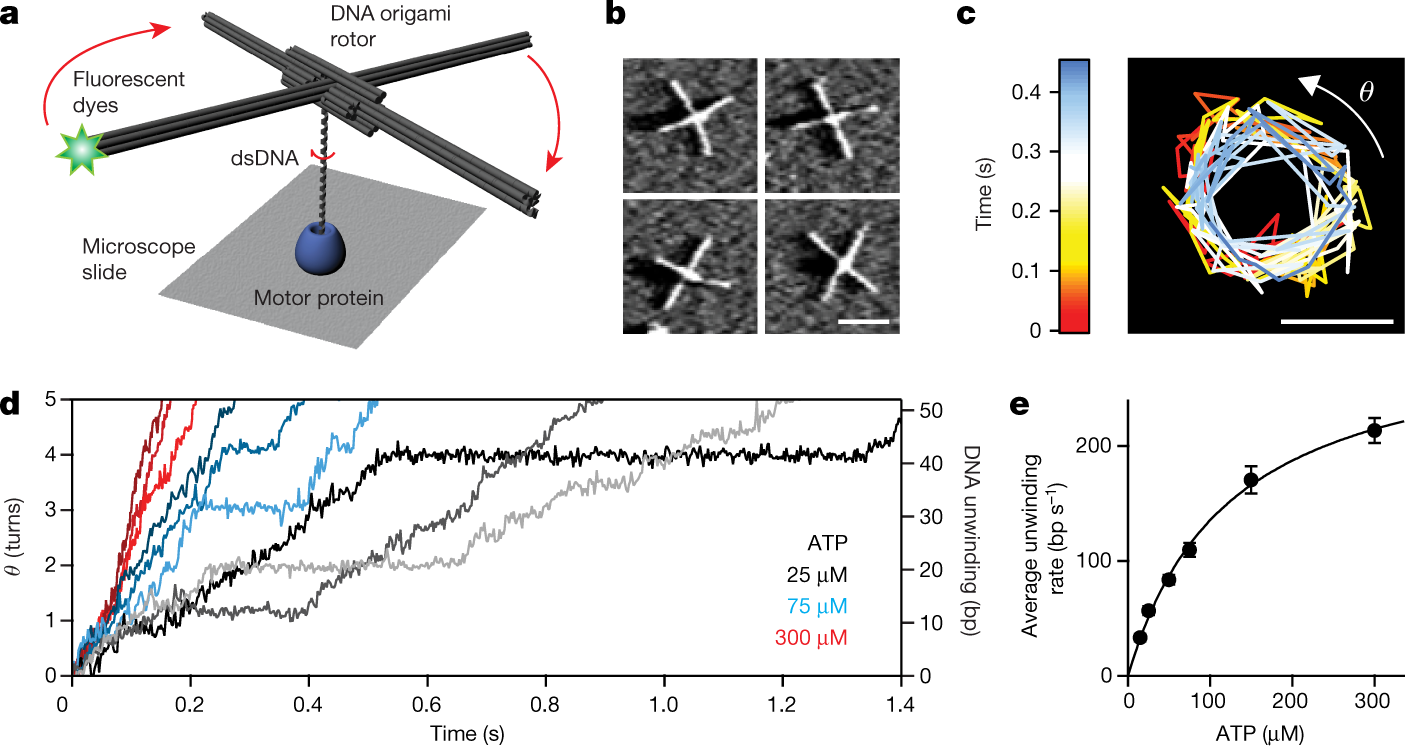 Rotation tracking of genome-processing enzymes using DNA origami rotor