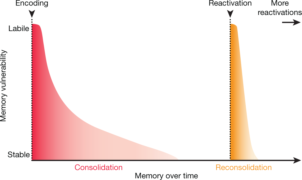 Memory editing from science fiction to clinical practice