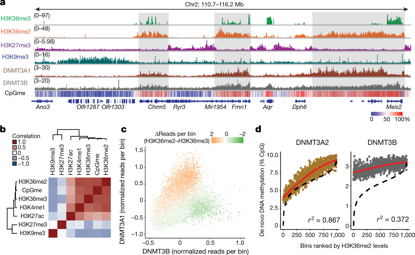 The histone mark H3K36me2 recruits DNMT3A and shapes the intergenic DN